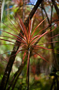 Tropical Foliage Posters - Tropical Star Poster by Mike Reid