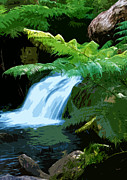 Nature Reserve Originals - Tropical stream waterfall by Phill Petrovic
