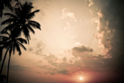 Silhouetted Posters - Tropical Sun Poster by Nila Newsom