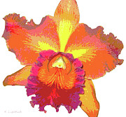 Kerri Ligatich Digital Art - Tropical Sunrise Orchid by Kerri Ligatich
