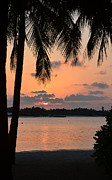 Tree Reflection At Sunset Posters - Tropical Sunset Poster by Corinne Rhode