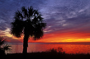 Apalachicola Prints - Tropical Sunset - FS000214 Print by Daniel Dempster