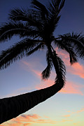 Tropical Sunset Prints - Tropical sunset palm Print by Pierre Leclerc