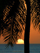 Tropical Sunset Print by Paul Topp