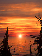 Tropical Sunset Prints - Tropical Sunset V6  Print by Douglas Barnard