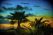 Chris Lord - Tropical Sunset With Pelicans