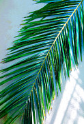 Frond Prints - Tropical Print by Susanne Van Hulst