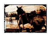 Horse Whip Digital Art Posters - Trotting 1 Poster by Pedro Cardona