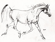 Horses Drawings - Trotting Arabian Horse Quick  Sketch by Angel  Tarantella