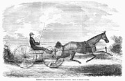 Trotting Photos - Trotting Horse, 1853 by Granger