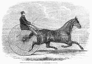 Trotting Photos - Trotting Horse, 1861 by Granger