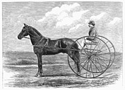 Trotting Photos - Trotting Horse, 1867 by Granger