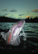 Trout Greeting Card Photo Posters - Trout Bum Paradise Poster by Brian Pelkey
