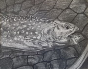 Fly Fishing Drawings Originals - Trout In Net by Michelle Grove