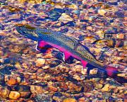 Trout Stream Landscape Prints - Trout Stream Print by Terril Heilman