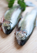 Cutting Board Posters - Trouts Poster by Carlo A