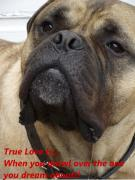 Big Eye Dog Posters - True Love 4 Dogs Dribble Poster by Dawn Hay