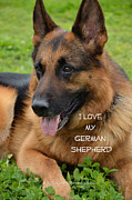 German Shephard Prints - True Love Print by Lovely  Scenes Photography