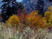 Earth Tone Posters - Truly Smokie Mountain Autumn Poster by Eva Thomas