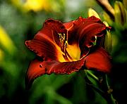 Orange Tiger Lily Prints - Trumpet Print by Lyle  Huisken