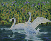 Swans... Paintings - Trumpeter Swans by Jan Oxendale