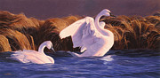 Swans... Paintings - Trumpeter Swans- Sunset On Oxbow Bend  by Shawn Shea