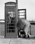 Elephant Prints - Trunk Call Print by John Drysdale