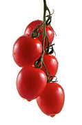 Tomatoes Metal Prints - Truss Metal Print by Gert Lavsen