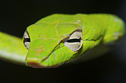 Whip-snake Prints - Trust in me Print by Gary Bridger