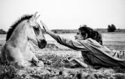 Wild Horse Photos - Trustful Friendship  by Justyna Lorenc
