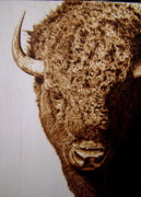 Bison Pyrography Originals - Try Me by Adam Owen