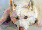 Husky Dog Paintings - Tsikos Eyes by Kimberly Santini