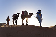 Traditional Clothing Framed Prints - Tuareg Man With Camel Train, Sahara Desert, Morocc Framed Print by Peter Adams