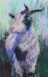 Farm Animals Pastels Prints - Tucker Redux Print by Susan Williamson