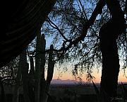 Tucson Tapestries Textiles - Tucson Evening by Joe Bonita