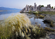 Tufa Posters - Tufa Towers At Lake Mono Poster by Bob Gibbons