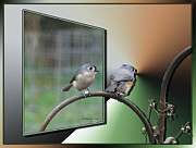 Oof Prints - TUFTED TITMICE-1st Place in OOF Contest Print by EricaMaxine  Price