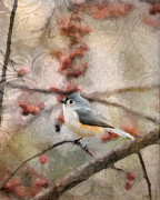 Baeolophus Bicolor Posters - Tufted Titmouse 2 Poster by Betty LaRue
