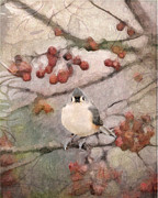 Baeolophus Bicolor Posters - Tufted Titmouse Poster by Betty LaRue