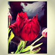 Impressionism Art - Tulip Aflame by Paul Cutright