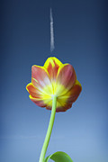Patterned Prints - Tulip Print by Al Hurley
