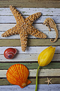 Seahorses Prints - Tulip and starfish Print by Garry Gay