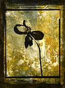 Blooming Digital Art Metal Prints - Tulip Metal Print by Bernard Jaubert