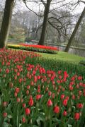 Parcs Framed Prints - Tulip Carpet  Framed Print by Valia Bradshaw