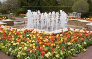 Tranquil Scene Photo Originals - Tulip Garden by Elvira Butler