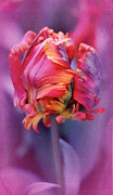 Vibrant Colors Prints - Tulip Psychedelica Print by Richard Cummings