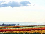 Multihued Prints - Tulip Town 13 Print by Will Borden