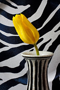 Yellow Flowers Posters - Tulip With Strips Poster by Garry Gay