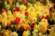 Tamyra Ayles - Tulips and Daffodils