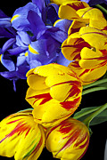 Colorful Leaves Photos - Tulips and iris by Garry Gay